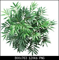 Click image for larger version.  Name:bamboo-top-down.jpg Views:33 Size:120.0 KB ID:124894