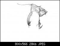 Click image for larger version.  Name:Dürer 4-1.jpg Views:47 Size:28.5 KB ID:128934