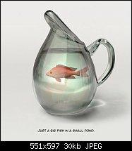 Click image for larger version.  Name:big pond fish.jpg Views:52 Size:30.1 KB ID:120331
