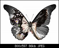 Click image for larger version.  Name:butterfly girl.jpg Views:13 Size:85.9 KB ID:126639