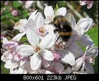 Click image for larger version.  Name:bee-3.jpg Views:93 Size:222.8 KB ID:127715