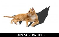 Click image for larger version.  Name:cat1.jpg Views:61 Size:23.4 KB ID:125577