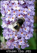 Click image for larger version.  Name:bee-4.jpg Views:95 Size:71.6 KB ID:127716