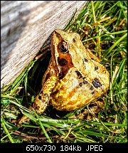 Click image for larger version.  Name:frog-colour.jpg Views:28 Size:184.1 KB ID:125041