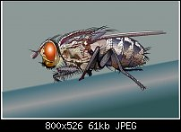 Click image for larger version.  Name:myfly.jpg Views:560 Size:61.5 KB ID:109763
