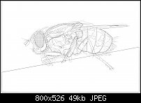 Click image for larger version.  Name:myflywireframe.jpg Views:303 Size:48.8 KB ID:109764