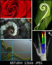 Click image for larger version.  Name:golden ratio.jpg Views:72 Size:131.3 KB ID:123381
