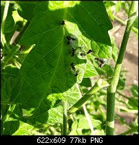 Click image for larger version.  Name:flying ants grounded.jpg Views:64 Size:77.5 KB ID:130180
