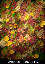 Click image for larger version.  Name:NotAutumn.jpg Views:166 Size:89.4 KB ID:110298