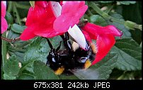Click image for larger version.  Name:bee-1.jpg Views:39 Size:241.8 KB ID:127713