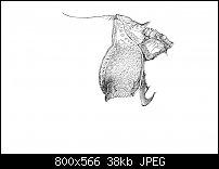 Click image for larger version.  Name:Dürer 4-2.jpg Views:90 Size:37.9 KB ID:128982