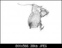 Click image for larger version.  Name:Dürer 4-2.jpg Views:74 Size:37.9 KB ID:129049