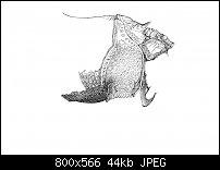 Click image for larger version.  Name:Dürer 4-3.jpg Views:85 Size:44.5 KB ID:129050