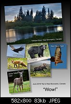 Click image for larger version.  Name:new brunswick.jpg Views:39 Size:83.5 KB ID:121400