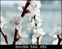 Click image for larger version.  Name:DSC_9464-1.jpg Views:87 Size:53.0 KB ID:70740