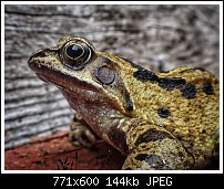 Click image for larger version.  Name:frog.jpg Views:52 Size:144.3 KB ID:130059
