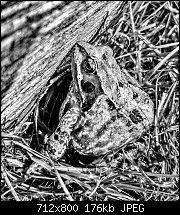Click image for larger version.  Name:bw-frog.jpeg Views:76 Size:176.2 KB ID:125015