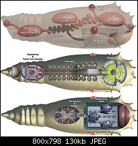 Click image for larger version.  Name:nelid-chrysalis-deck-plans.jpg Views:38 Size:129.7 KB ID:124109