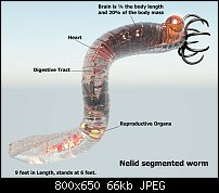 Click image for larger version.  Name:nelid-ecology.jpg Views:41 Size:65.7 KB ID:124152