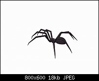 Click image for larger version.  Name:spider 1.jpg Views:44 Size:18.0 KB ID:126069