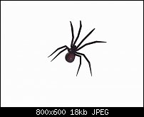 Click image for larger version.  Name:spider3.jpg Views:42 Size:18.2 KB ID:126071