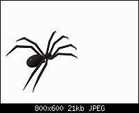 Click image for larger version.  Name:spider40001.jpg Views:46 Size:21.5 KB ID:126072